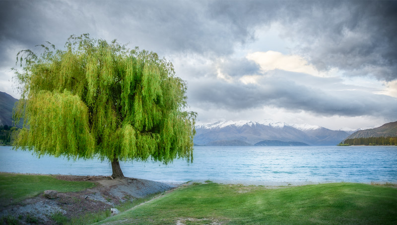 To anyone who has been to Wanaka on the South Island of New Zealand, they would know what the THE tree is. And this is NOT the one, but it is a tree in Wanaka that I liked too. Photo: Jacob Surland, www.caughtinpixels.com